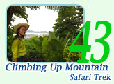 Climbing Up Mountain Safari Trek