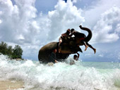 Elephant Lover on The Beach