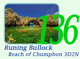 Running Bullock Beach of Chumphon