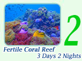 Fertile Coral: 3 days 2 nights