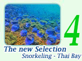 The new Selection of snorkeling - Thai Bay