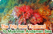 The Trip from Thailand to Myanmar Andaman Sea
