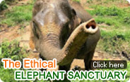 The Ethical Elephant Sanctuary