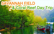 Savannah Field and Coral Reef Day Trip
