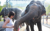 Elephant Bathing and City Tour Phuket