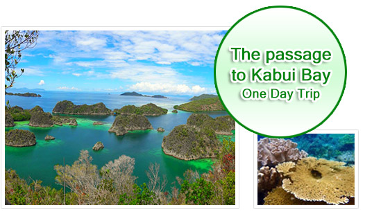 One Day Tour - The passage to Kabui Bay