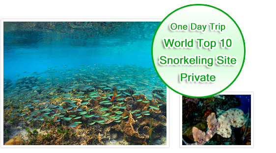 One Day Tour - World Top Ten Snorkeling Site