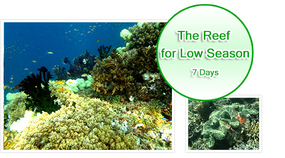 The Reef Great for Low Season